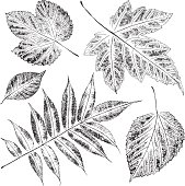 Set of leaves. Paint, stamp on a paper.