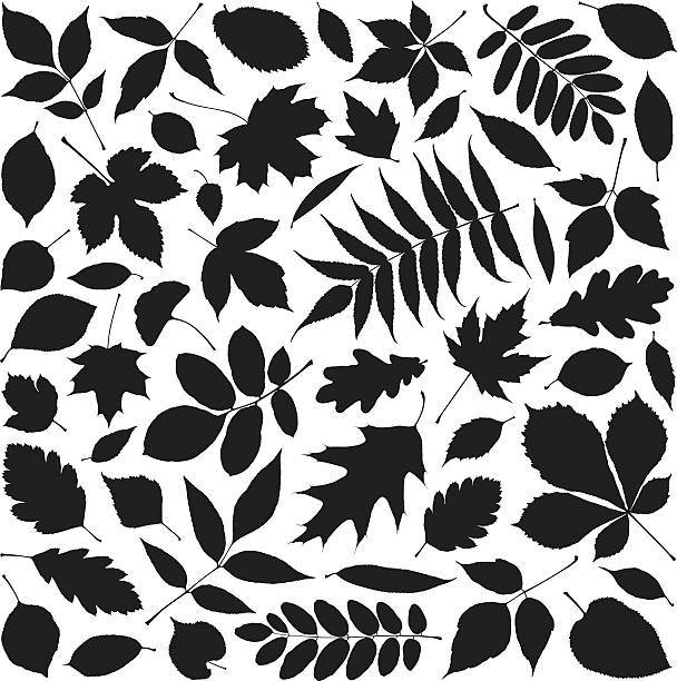 Leaves Shapes of leaves autumn silhouettes stock illustrations