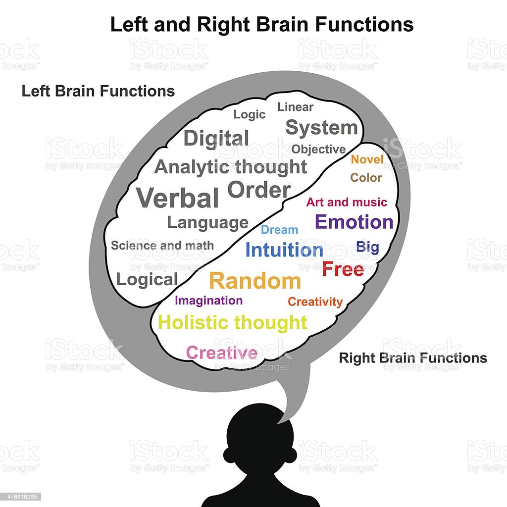 Left And Right Brain Function Illustration Stock Vector Art More