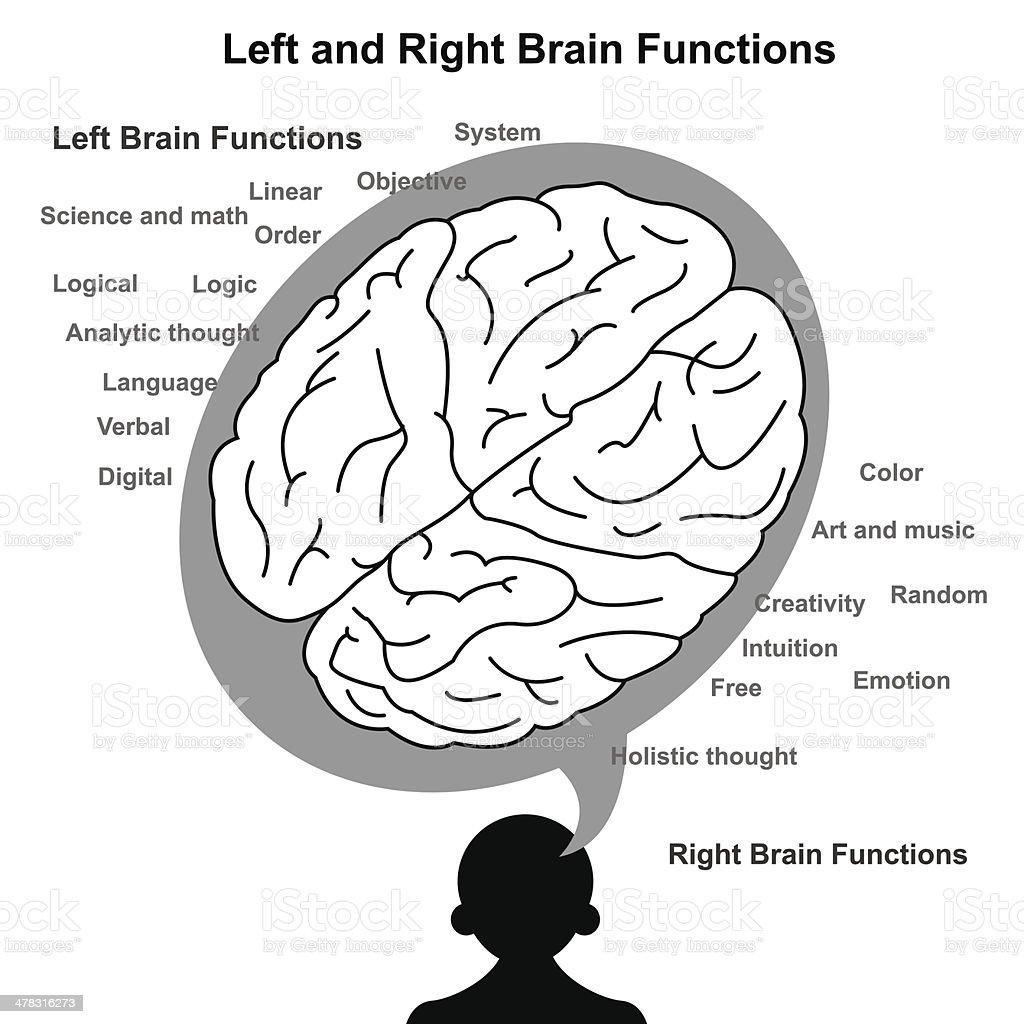 Left and Right brain function illustration royalty-free stock vector art