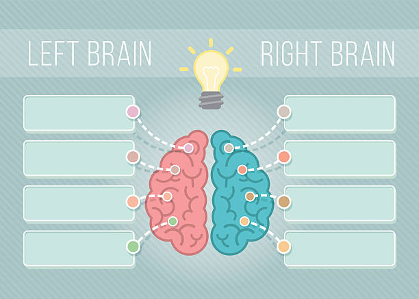 Left and Right Brain Infographics Modern flat conceptual vector illustration of left and right hemispheres of the brain with speech bubbles for text. Logical and creative functions of the brain. Infographics element parietal lobe stock illustrations