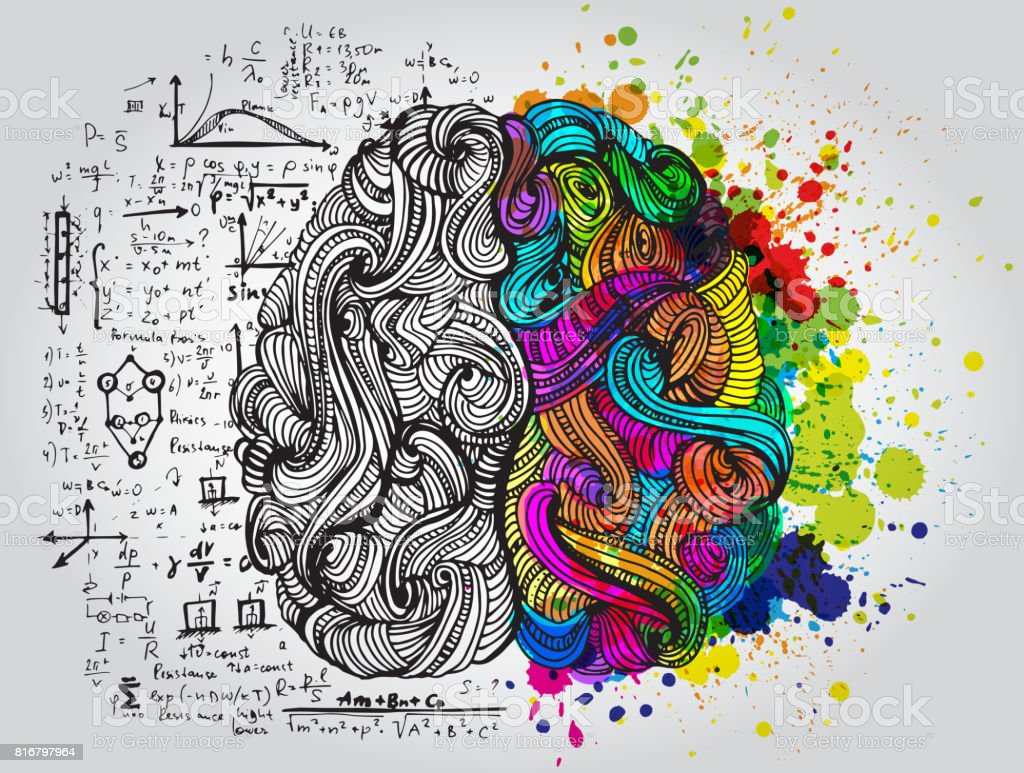 Left and right human brain. Creative half and logic half of human mind. Vector illustration. vector art illustration