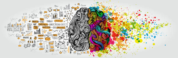 Left right human brain concept. Creative part and logic part with social and business doodle Left right human brain concept. Creative part and logic part with social and business doodle isolated on white background creative occupation stock illustrations