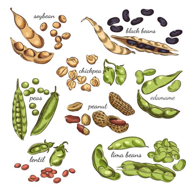 マメ科植物は手描き下ろしイラストです。 - 枝豆点のイラスト素材/クリップアート素材/マンガ素材/アイコン素材