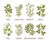 Legumes plants with leaves, pods and flowers