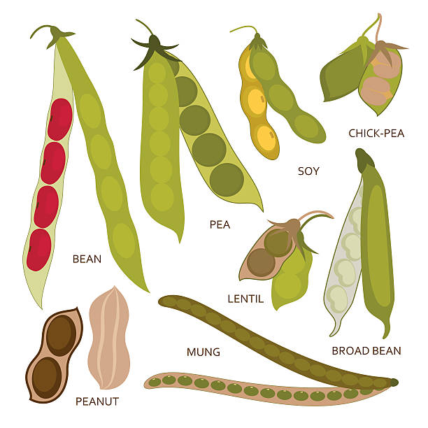 legumes pods set in flat style. vector illustration. - plant pod stock illustrations