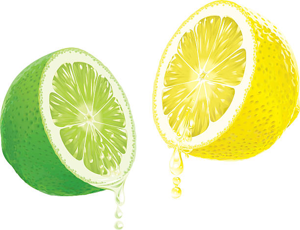 Lemon and Lime with dripping Juice vector art illustration