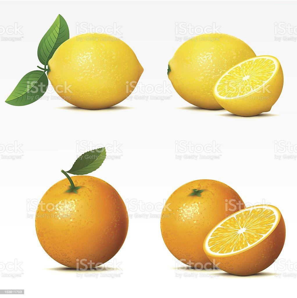 Lemon and orange both whole and cut in half vector art illustration