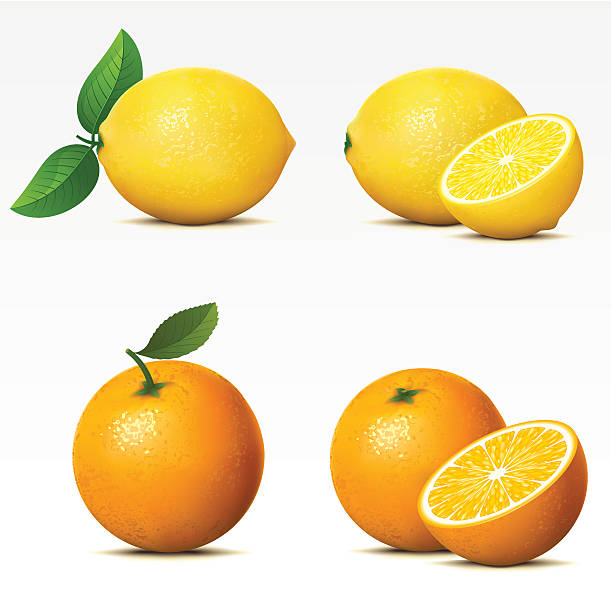 Lemon and orange both whole and cut in half Collection of fruits on white background Mesh.  lemon fruit stock illustrations