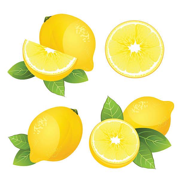 lemon fruit slice set. realistic citrus with leaves vector isolated - レモン点のイラスト素材/クリップアート素材/マンガ素材/アイコン素材