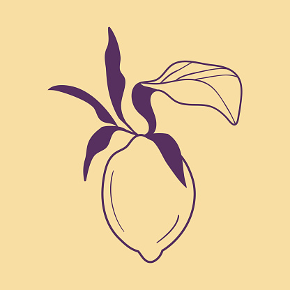 Lemon fruit with lives in purple color on light nougat background. Trendy botanical hand drown illustration.
