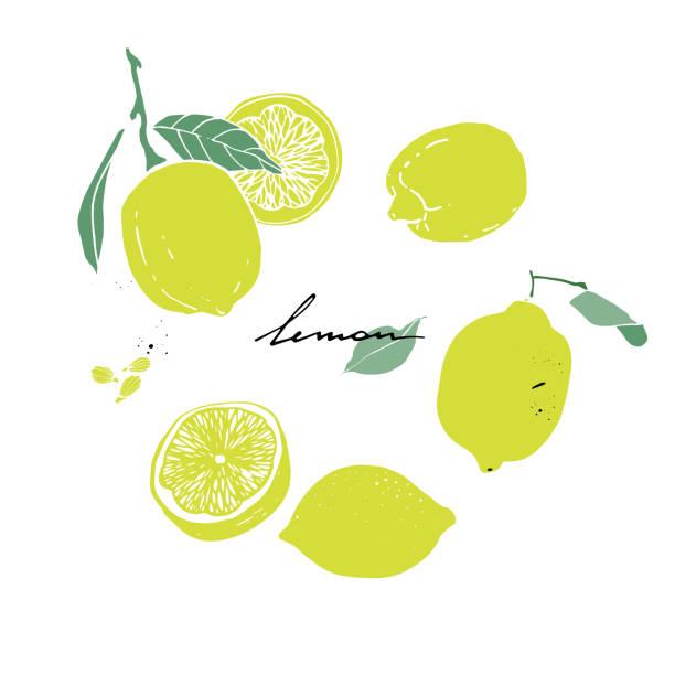 レモン、葉、スライスとレモンの種子。手描きのセット。 - ライム点のイラスト素材/クリップアート素材/マンガ素材/アイコン素材