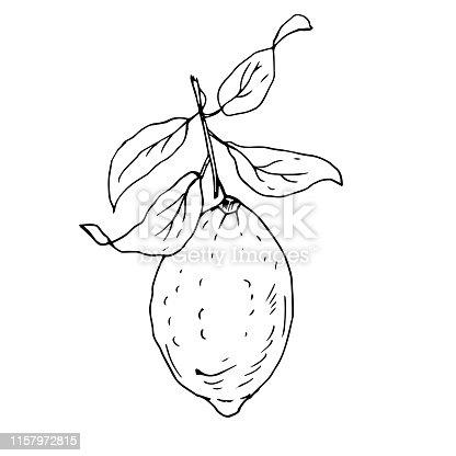 Limon Dali Clip Art Free Download