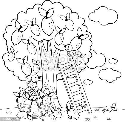 Limon Ağacı Hasat Boyama Kitabı Sayfası Stok Vektör Sanatı Ağaç