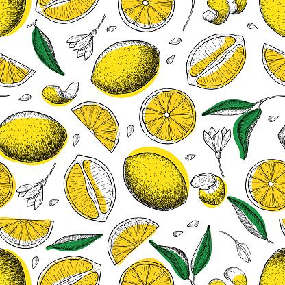Lemon vector seamless pattern. Drawing lemon colorful background