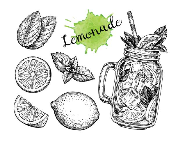 Lemonade and ingredients. Lemonad set. Isolated on white background. Hand drawn vector illustration. Retro style ink sketch. lemon fruit stock illustrations