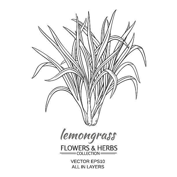 Best Lemongrass Illustrations Royalty Free Vector Graphics Amp Clip Art Istock