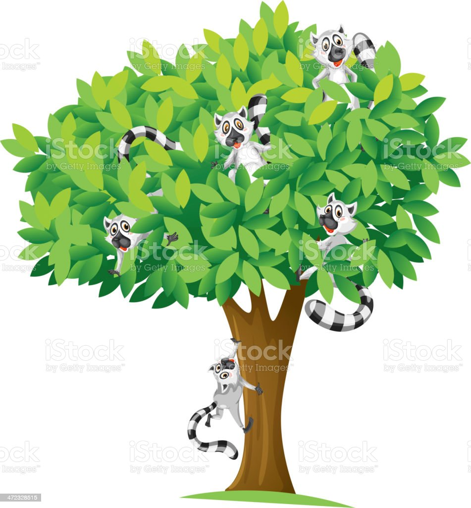 Lemurs on tree royalty-free stock vector art