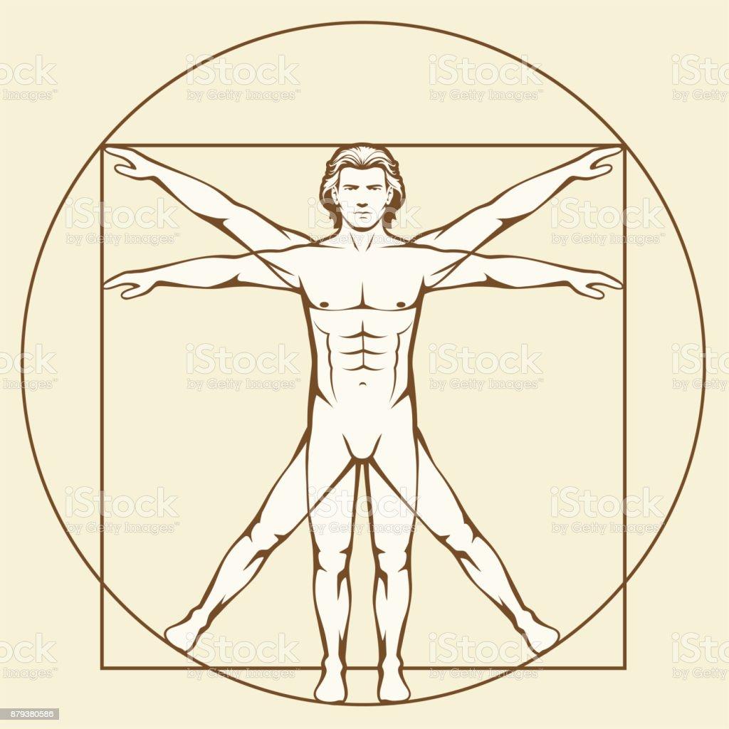 Leonardo Da Vinci Vetruvian Mann Stock Vektor Art und mehr Bilder ...