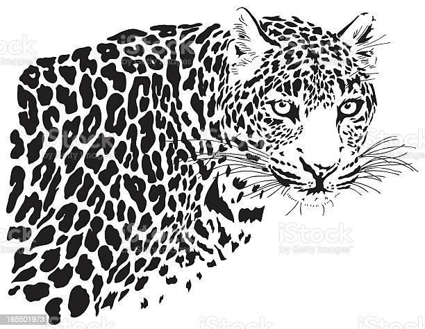 Leopard illustration vector id165501973?b=1&k=6&m=165501973&s=612x612&h=zg0fbp52ivnql2x4hhzurachxbm8aox8rfiyziksx m=