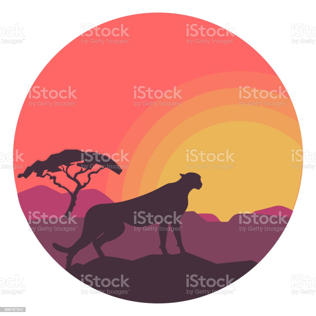 Leopard in safari with sunset in circle. Vector illustration on white background vector art illustration