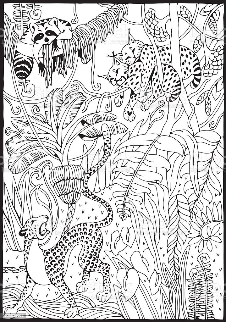 Leopard Lynx And Raccoon In The Junglecoloring Page Stock Illustration -  Download Image Now - IStock