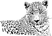 Leopard illustration in black lines