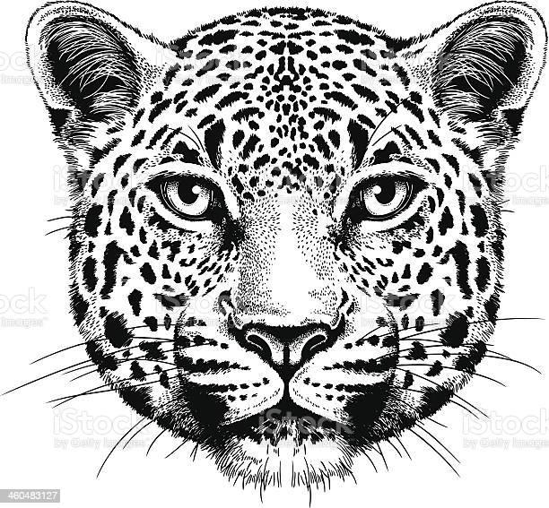Leopard portrait vector id460483127?b=1&k=6&m=460483127&s=612x612&h=3hbbyy0klq6dul iqh1ebmnbcefaooucaquvxknx2zu=