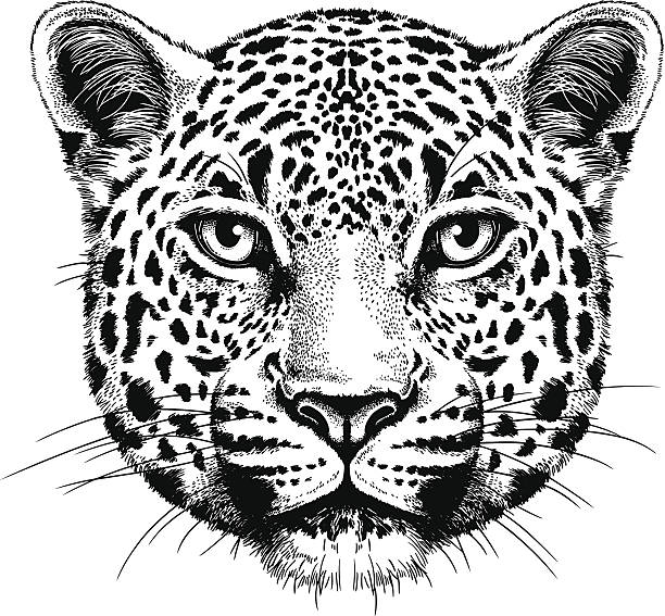stockillustraties, clipart, cartoons en iconen met leopard portrait - leopard print