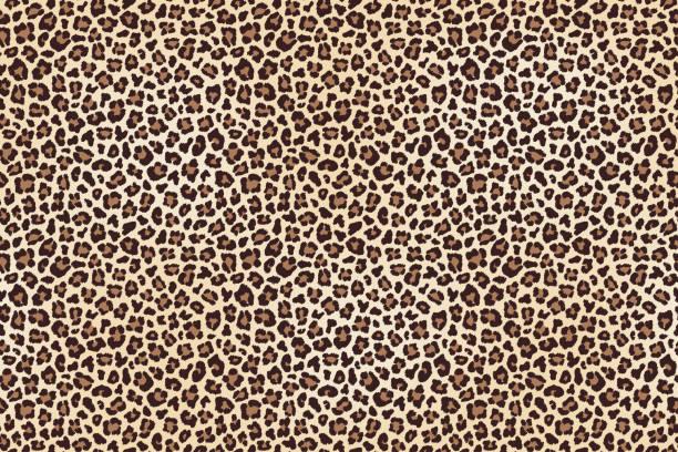 ilustraciones, imágenes clip art, dibujos animados e iconos de stock de visto textura de piel de leopardo - textura de leopardo