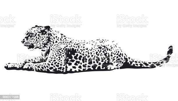 Leopard vector art vector id956377588?b=1&k=6&m=956377588&s=612x612&h=c0wignlece0v9mjvx3v5ihqjbtti  fbddgxpmgocs8=