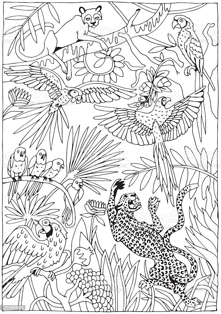 Leopards And Parrots In The Jungle Stock Illustration - Download Image Now  - IStock
