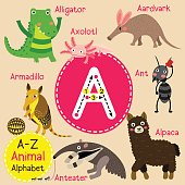 Letter A tracing. Ant. Aardvark. Armadillo. Alligator. Alpaca. Anteater. Axolotl
