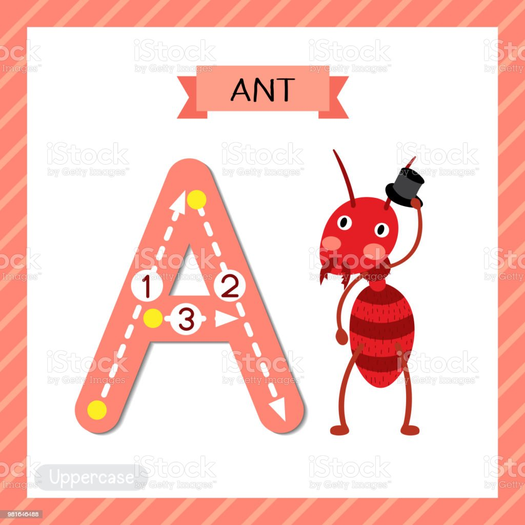 Letter A Uppercase Tracing Fire Ant With Hat Stock Vector Art & More ...