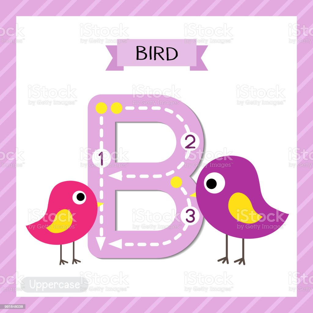 Letter B Uppercase Tracing Standing Colorful Bird Stock Vector Art ...