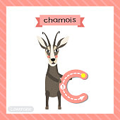 Letter C lowercase tracing. Chamois standing on two legs