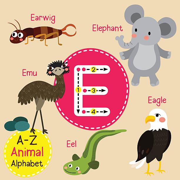 illustrations, cliparts, dessins animés et icônes de letter e tracing. eagle. earwig. eel. elephant. emu. - enseignant(e) en maternelle