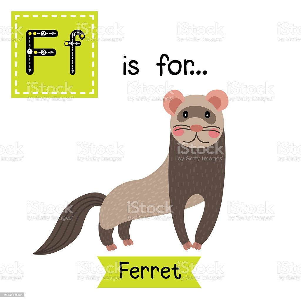 Letter F Tracing Standing Ferret Stock Vector Art More Images Of
