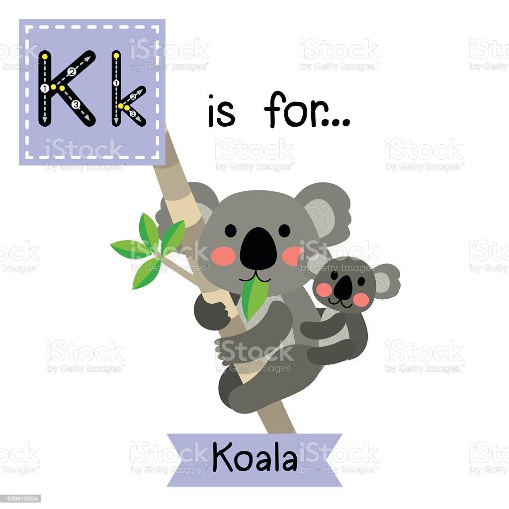 Letter K tracing. Koala bear and baby koala. vector art illustration