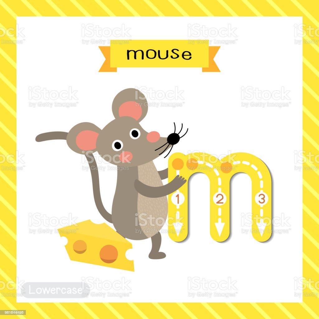 Buchstabe M Kleinbuchstaben Ablaufverfolgung Maus Mit Käse Stock ...