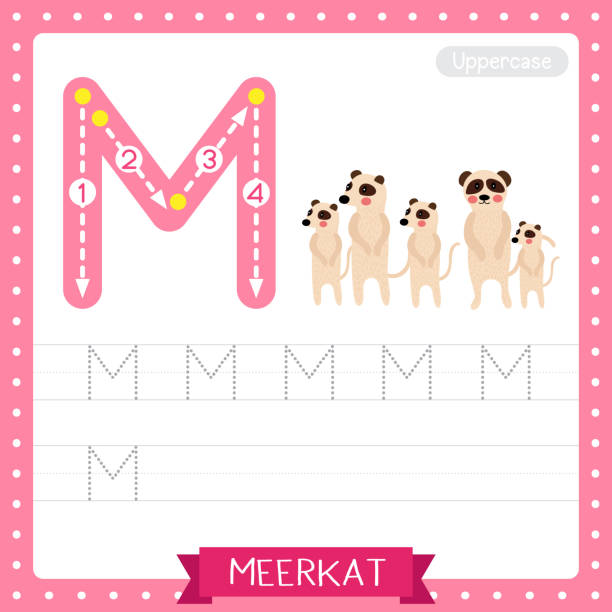 Letter M uppercase tracing practice worksheet of Standing Meerkat family group Letter M uppercase cute children colorful zoo and animals ABC alphabet tracing practice worksheet of Standing Meerkat family group for kids learning English vocabulary and handwriting vector illustration. meer stock illustrations