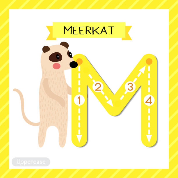 Letter M uppercase tracing. Standing Meerkat Letter M uppercase cute children colorful zoo and animals ABC alphabet tracing flashcard of Standing Meerkat for kids learning English vocabulary and handwriting vector illustration. meer stock illustrations