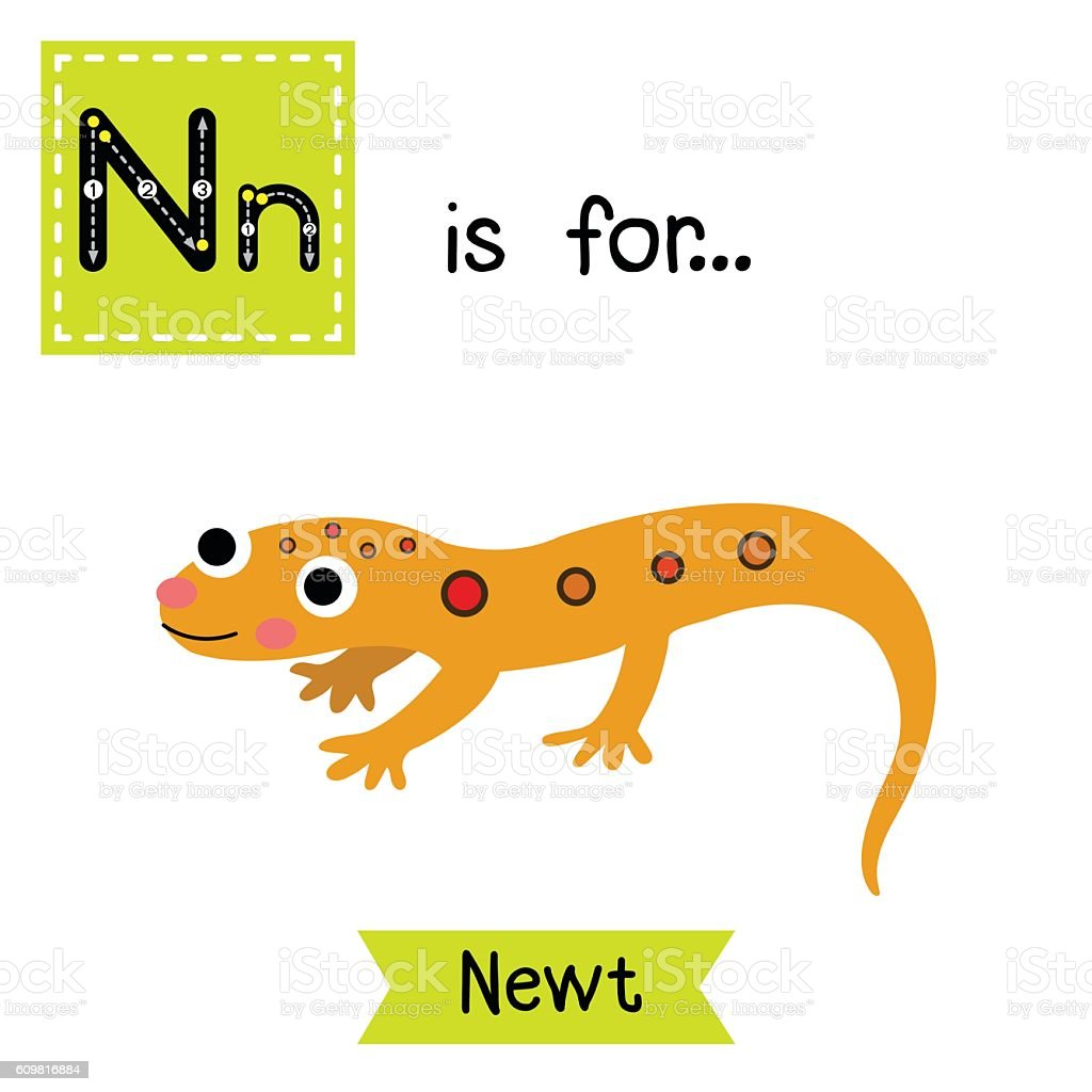royalty free newt clip art vector images illustrations istock rh istockphoto com new clipart software newt clipart free