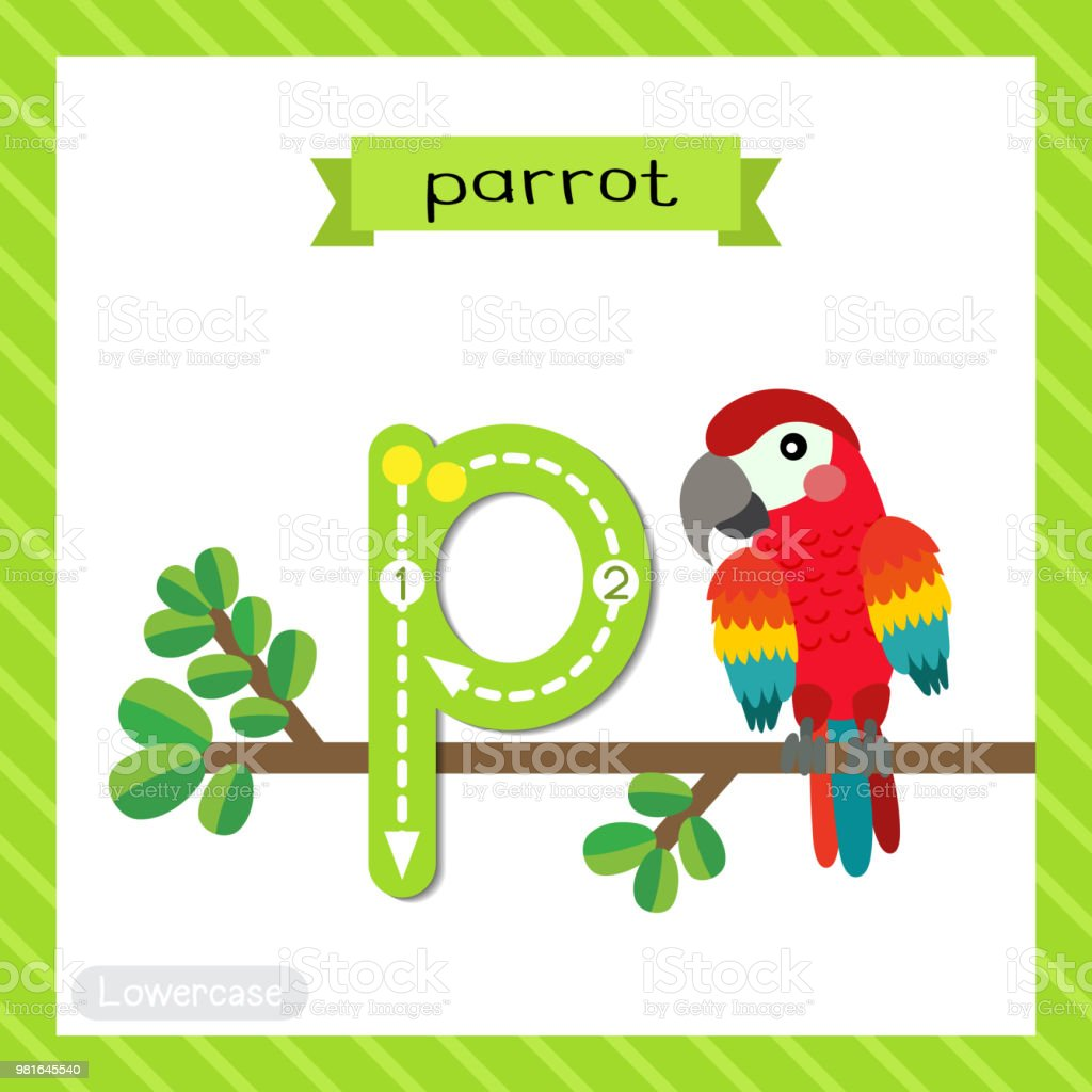 Letter P Lowercase Tracing Red Parrot Bird Royalty Free