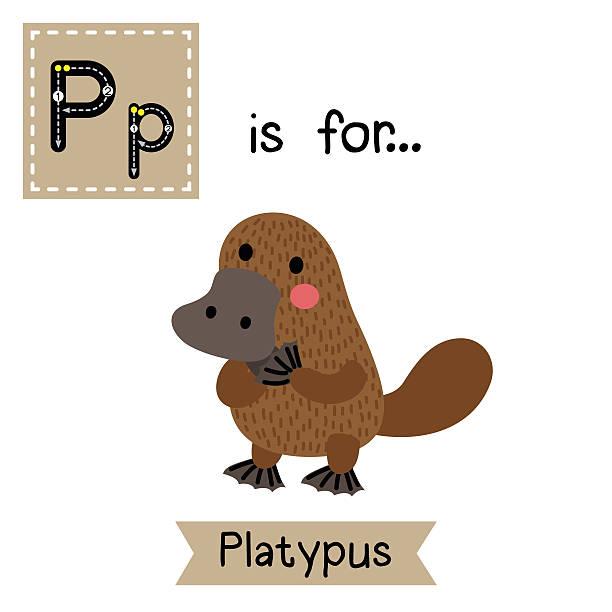bildbanksillustrationer, clip art samt tecknat material och ikoner med letter p tracing. standing platypus. - platypus