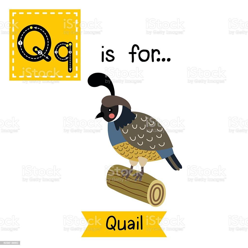 Q Is For Quail Letter Q Tracing Quail...