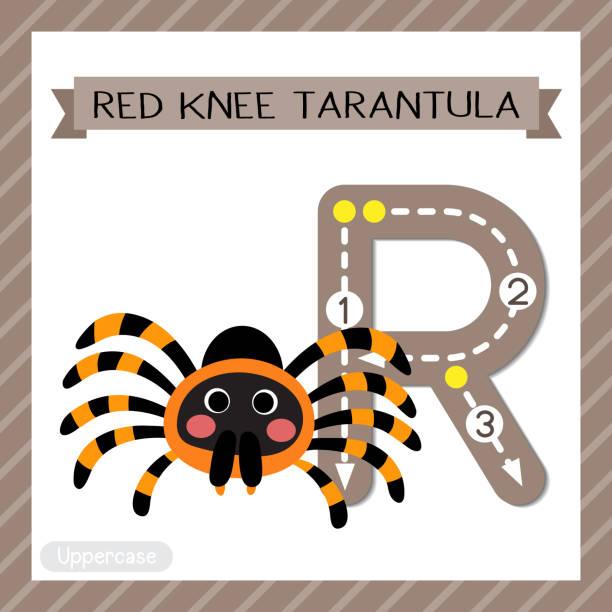 letter r uppercase tracing. red knee tarantula - tarantula stock illustrations