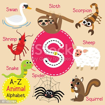 S letter tracing. Scorpion. Sheep. Shrimp. Sloth. Snake. Spider. Squirrel. Swan. Cute children zoo alphabet flash card. Funny cartoon animal. Kids abc education. Learning English vocabulary. Vector illustration.