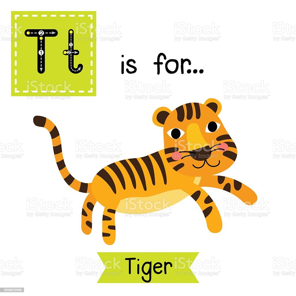 Letter T Tracing Standing Tiger Royalty Free Stock