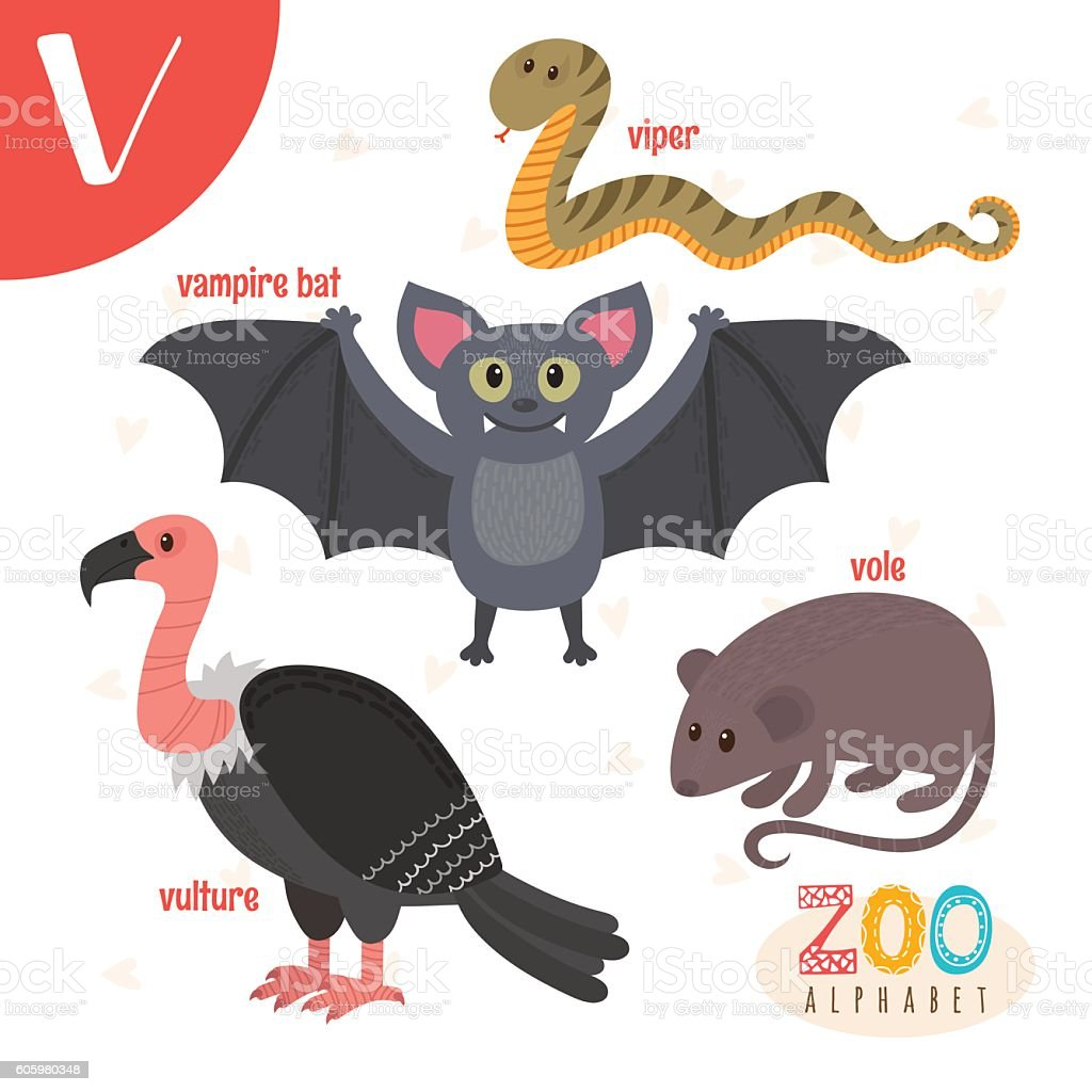 animals that start with v letter v animals animals in vector 21002 | letter v cute animals funny cartoon animals in vector vector id605980348